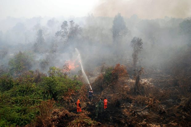 Indonesian fire fighters and military personnels extinguish the wildfire on a peat land in Rimbo Panjang , Kampar, Riau Province, Indonesia, 06 September 2015. - EPA.